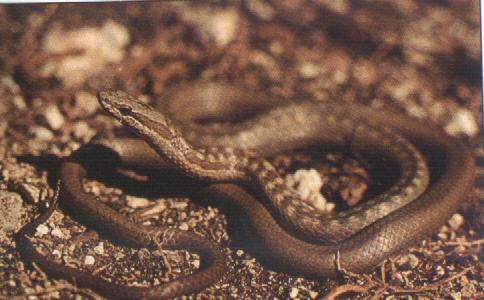 Reptilia expo il mondo dei rettili serpenti sauri for Nomi di rettili