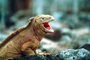 Reptilia expo il mondo dei rettili serpenti sauri for Quali sono i rettili